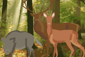 Beim Autofahren im Herbst kann des Öfteren Wild am Fahrbahnrand auftauchen.