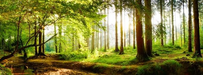 Ist das Befahren von Waldwegen und Feldwegen unproblematisch?