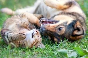 Das Entfernen vom Unfallort ist bei Unfällen mit Tieren unter bestimmten Umständen erlaubt.