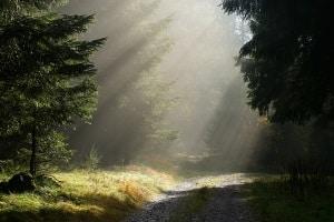In aller Regel dürfen reine Wald- und Forstwege nicht befahren werden.