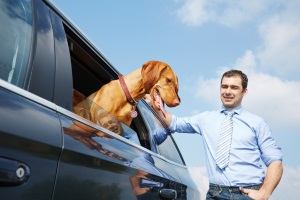 Es stellt sich die Frage: Was sagt, wenn ich die einen Hund im Auto bei Hitze sehe, die Rechtslage?