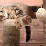 Katze überfahren: Kann Unfallflucht vorliegen?