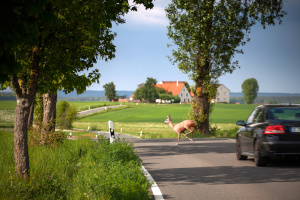 Auf der Landstraße außerorts herrschen viele Gefahren wie z.B. Wildwechsel.