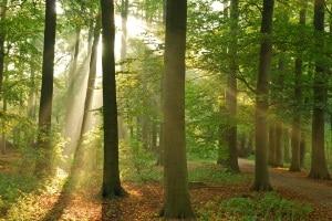 Auch im Bundesnaturschutzgesetz wird für einen Verstoß gegen den Natur- und Umweltschutz ein Bußgeld geregelt