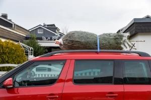 Wie lässt sich der Weihnachtsbaum am besten transportieren?