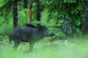 Wie sollten Sie sich bei Wildwechsel verhalten?